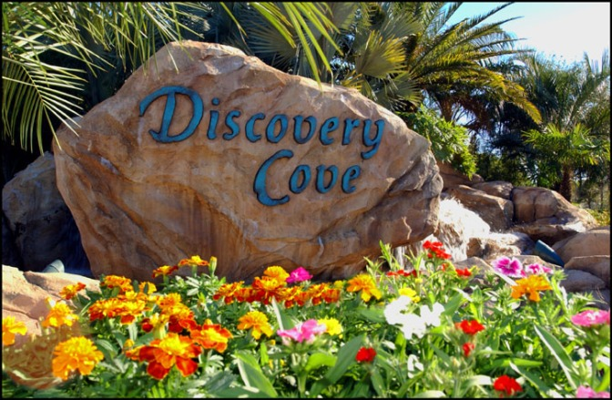 Discover Amazing at Discovery Cove